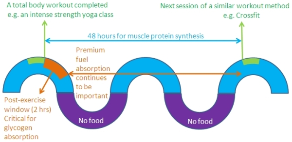The 48-hour clock for muscle-protein-synthesis
